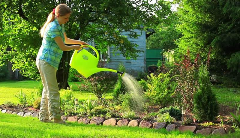 Zablude: Šta možete, a šta ne smete koristiti za zalivanje biljaka