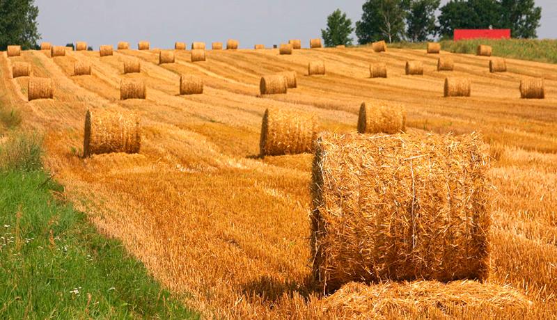 Prednosti i nedostaci: Poljoprivredna biomasa kao izvor energije